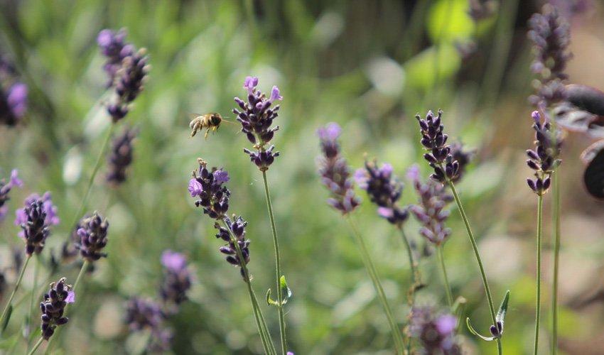 Blume_mit_Biene