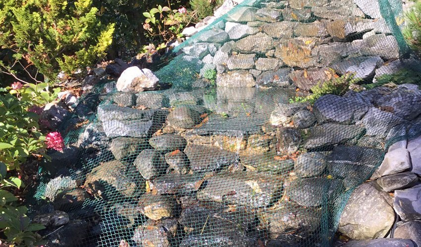 Teichservice f r die regelm ssige pflege ihres teich for Goldfischteich pflege
